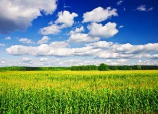 как взять землю в аренду с последующим выкупом у государства