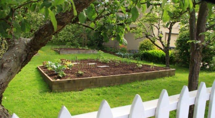 договор дарения садового участка