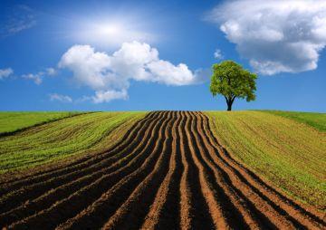 аренда сельскохозяйственных земель