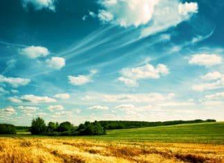 как купить землю у администрации сельского поселения