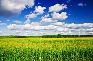 земельный участок для сельского хозяйства