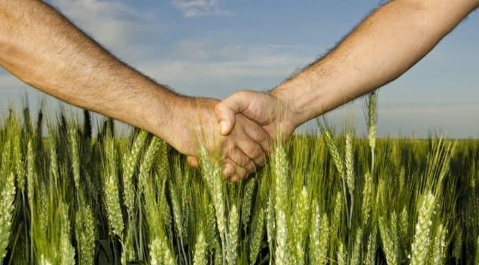 сдать в аренду землю сельхозназначения