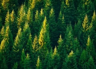 право пользования землями лесного фонда