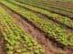 взять землю в аренду под фермерское хозяйство