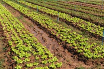 земля сельскохозяйственного значения