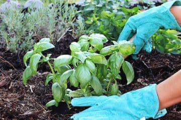 земля работникам сельского хозяйства