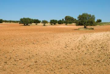 земля сельхозназначения