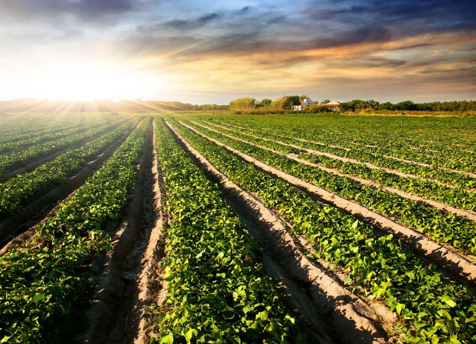Об обороте земель сельскохозяйственного назначения (с изменениями на 1 мая 2019 года), Федеральный закон от 24 июля 2002 года №101-ФЗ