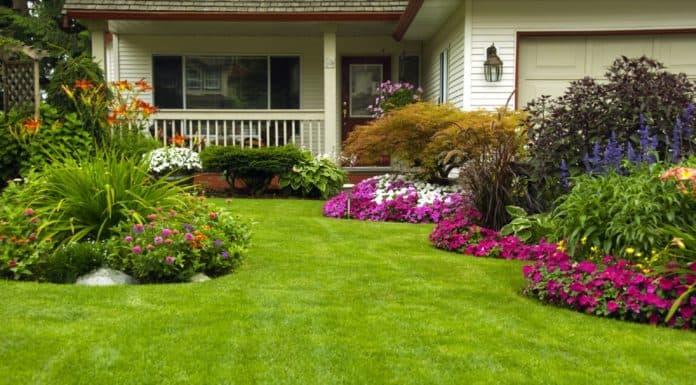 покупка дачного участка в садовом товариществе