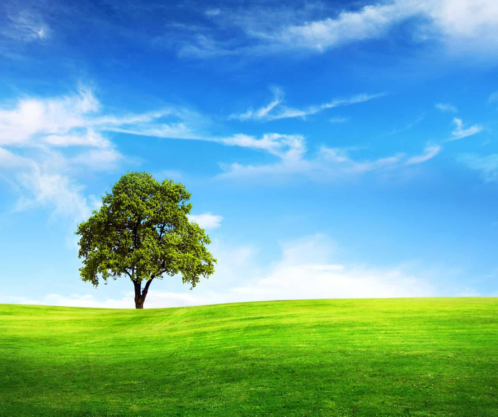 использование земельного участка без предоставления земельного участка