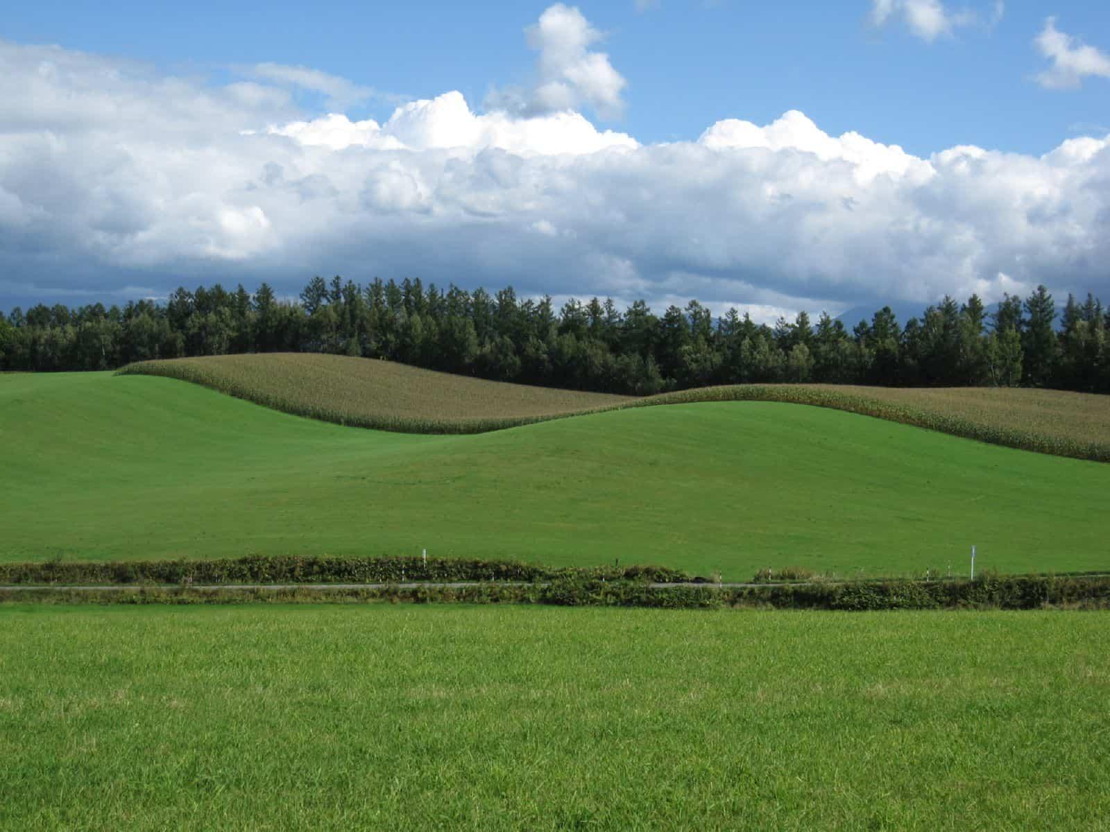Право постоянного пользования земельным участком в 2019 году, прекращение права постоянного бессрочного пользования земельным участком, переоформление, государственная регистрация