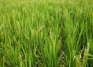как получить земли сельхозназначения бесплатно