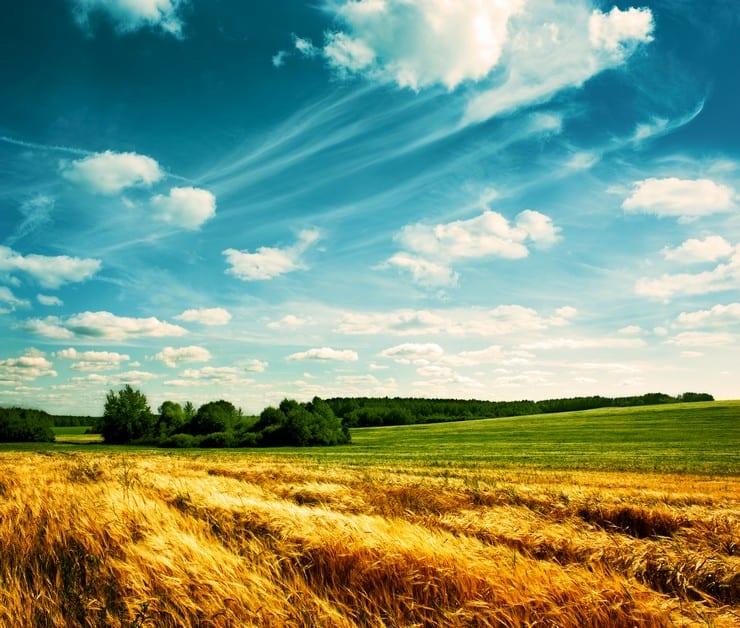 Как пересести земли земли сельскохозяйственного назначения в земли поселений