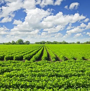 Земли предназначенные для садоводства и огородничества можно ли строить